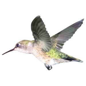 ruby_throated_hummingbird_2x3_ornament_photosculpture-p1530635218553795043s98_400