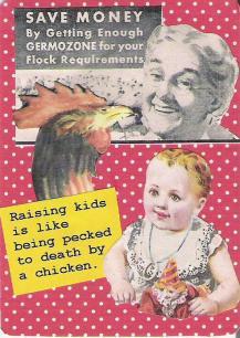 peckedtodeath