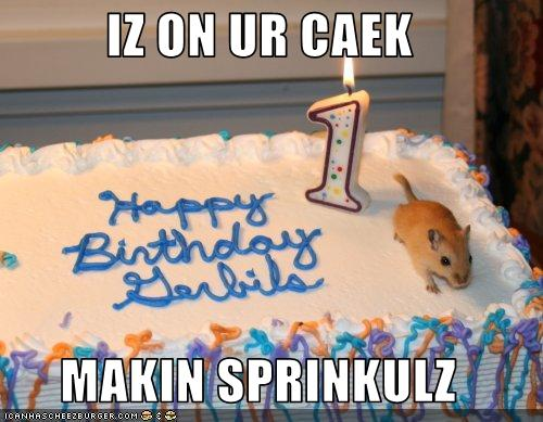 funny-pictures-gerbil-makes-sprinkles-fo