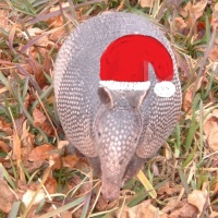 The Christmas Armadillo
