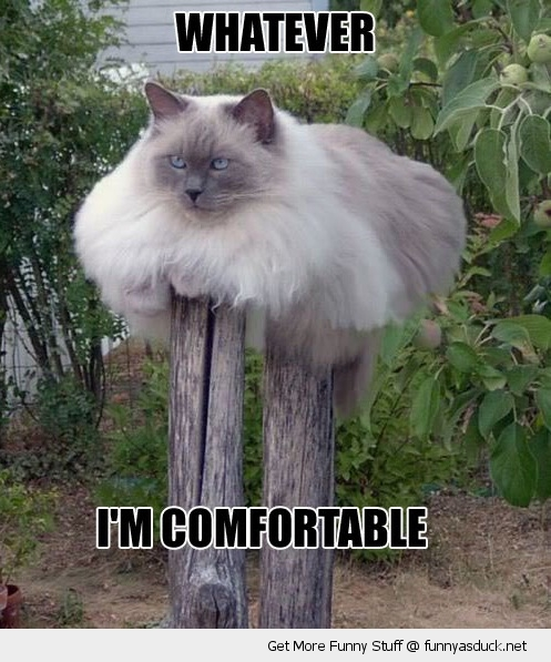funny-cat-sitting-post-whatever-comfortable-pics