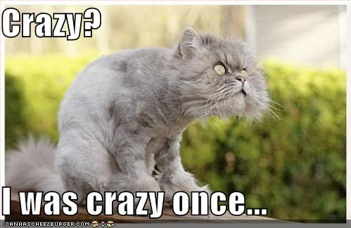 lolcat-crazy