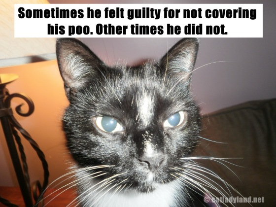 Image result for lolcat poop