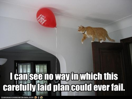 Image result for lolcat lesson